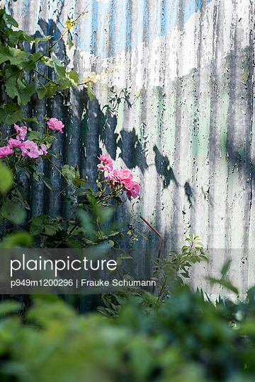 Verwitterter Gartenzaun  - p949m1200296 von Frauke Schumann