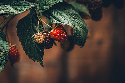 Raspberries, close-up - p1628m2208703 by Lorraine Fitch