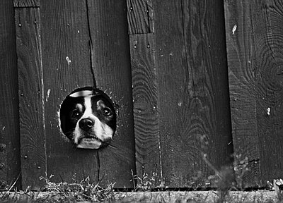 Dog looking through a fence - p7030030 by Anna Stumpf