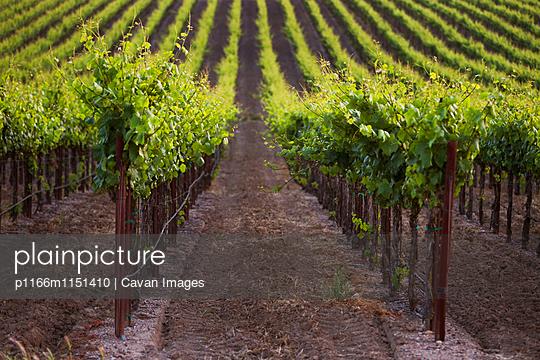 p1166m1151410 von Cavan Images