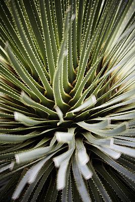 Kaktus - p4150540 von Tanja Luther