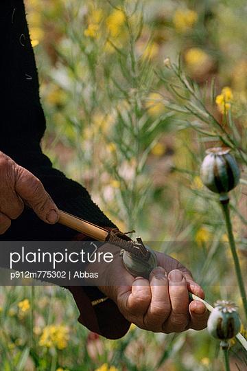p912m775302 von Abbas photography