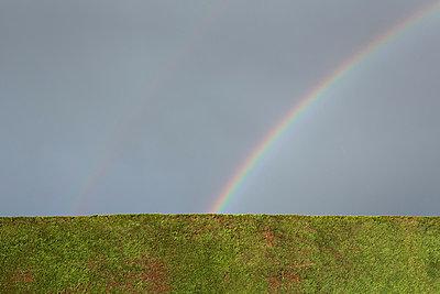 Regenbogen hinter der Hecke - p1057m881351 von Stephen Shepherd