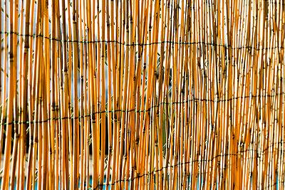 Sichtschutz aus Schilfrohren - p248m898673 von BY
