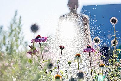 man watering flowers in garden - p312m1229189 by Ulf Huett Nilsson