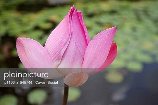 p1166m1545744 von Cavan Social