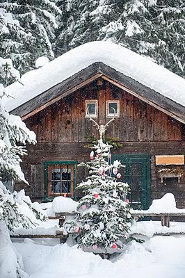 Austria, Altenmarkt-Zauchensee, Christmas tree at wooden house in snow - p300m2042022 by Hans Huber