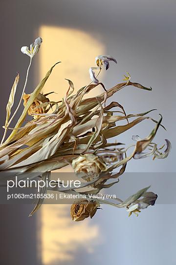 Dry flowers - p1063m2185836 by Ekaterina Vasilyeva