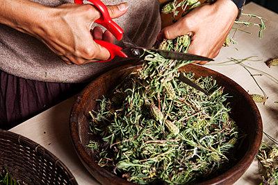 Lavendel schneiden - p1271m1539890 von Maurice Kohl