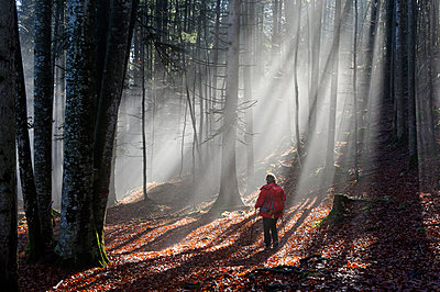 Germany, Bavaria, View of mature woman hiking in forest - p300m2207272 by Lisa und Wilfried Bahnmüller