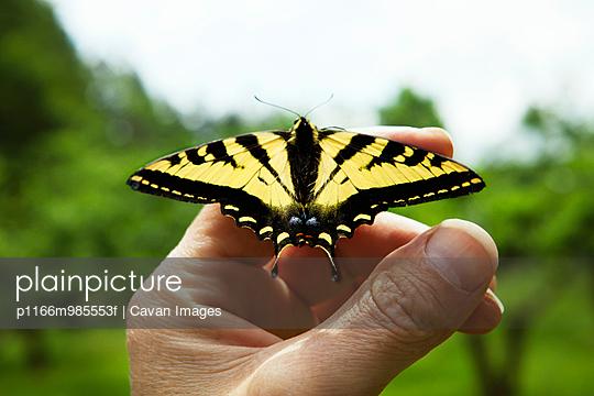 p1166m985553f von Cavan Images