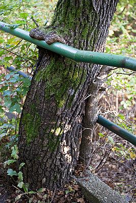 Tree bark growing over hand railing - p30119847f by Halfdark