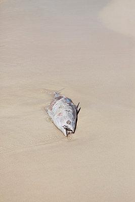 Water pollution - p045m815747 by Jasmin Sander