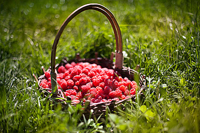 Basket of raspberries 2 - p1007m854298 by Tilby Vattard