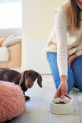 Woman holding pet bowl by dog at home - p300m2256067 by Kiko Jimenez