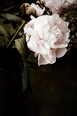 Wilted - p9793211 by Luther photography