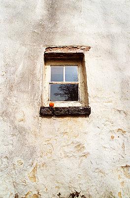 Window and Apple - p1072m828864 by Chinch Gryniewicz