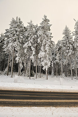 Forest and road in winter - p300m884800 by Biederbick&Rumpf