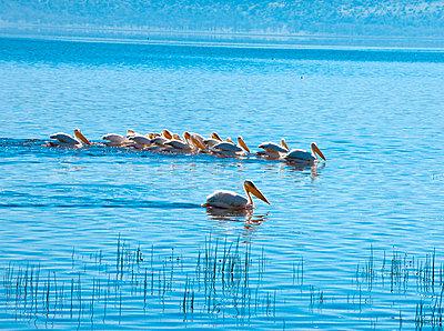 Kenya - p5330467 by Böhm Monika
