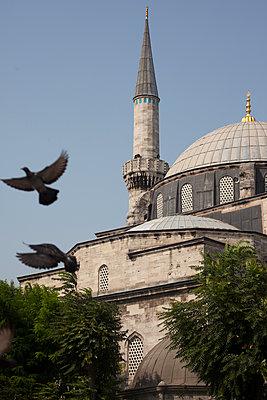 Tauben vor einer Moschee - p045m1486780 von Jasmin Sander