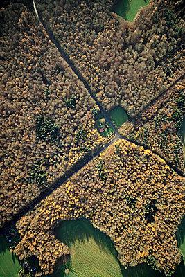 Herbstwald - p1016m1025661 von Jochen Knobloch