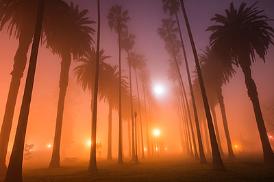 Low angle view of silhouette trees growing in park at dusk during foggy weather - p1166m1193887 by Cavan Images