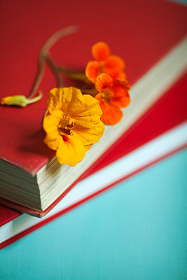 Nasturtium on Books  - p1248m1492074 by miguel sobreira