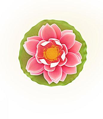Lotus - p1298m1134478 von mic