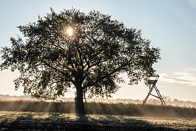 Single tree against morning fog - p739m2128181 by Baertels