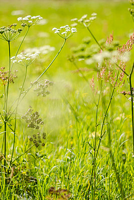 Meadow - p739m925446 by Baertels