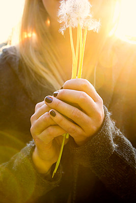 Young woman with dandelion clocks in her hands - p879m2204238 by nico