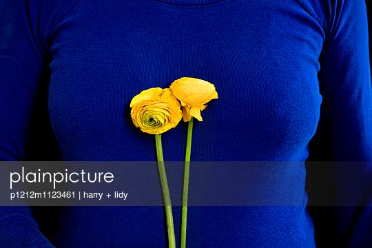 Gelbe Ranunkel vor blauem Top - p1212m1123461 von harry + lidy
