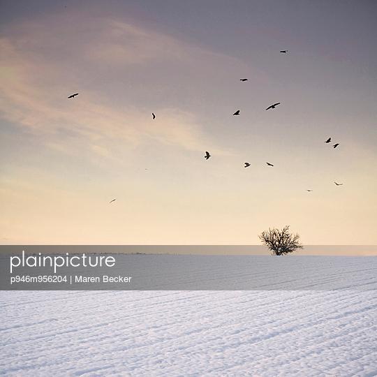 Baum auf schneebedecktem Feld im Sonnenuntergang - p946m956204 von Maren Becker