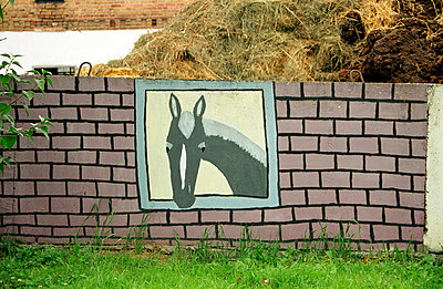Pferd guckt durchs Fenster - p0890016 von Gerd Olma