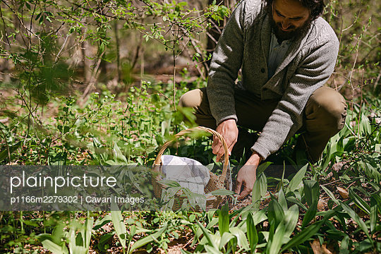 Man foraging for ramps in a New England forest - p1166m2279302 by Cavan Images