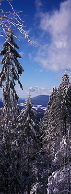 Spruce - p2350254 by KuS