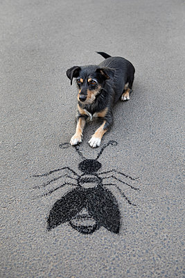 Portrait of mongrel lying on asphalt in front of drawn oversized insect - p300m2156638 by Petra Stockhausen