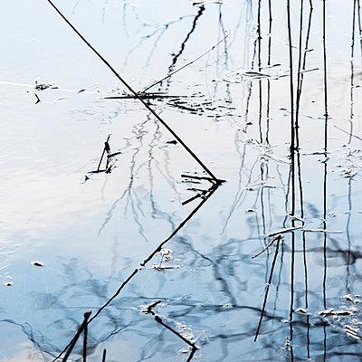 Zugefrorener See und Schilf - p816m1032171 von Elvegård, Stig Børre