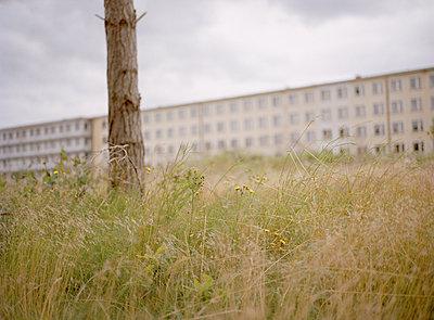 Wildnis, Koloss von Prora - p1199m1026181 von Claudia Jestremski