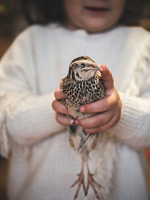 Girl holding quail in her hands  - p1522m2064644 by Almag