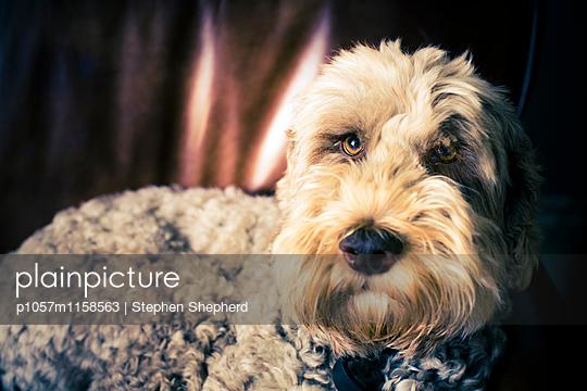 Freundlicher Hund - p1057m1158563 von Stephen Shepherd
