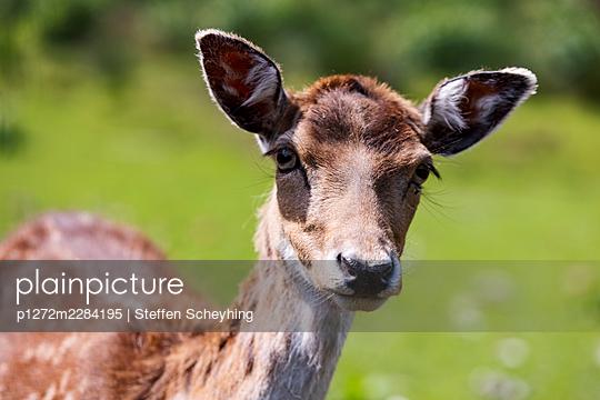 Deer - p1272m2284195 by Steffen Scheyhing
