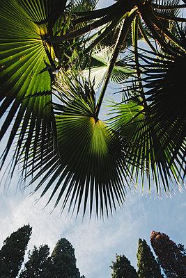 Palmwedel im Gegenlicht - p1150m2125987 von Elise Ortiou Campion