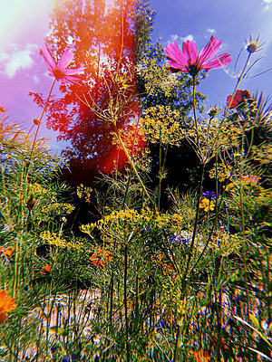 Colourful flowers - p1189m2263795 by Adnan Arnaout