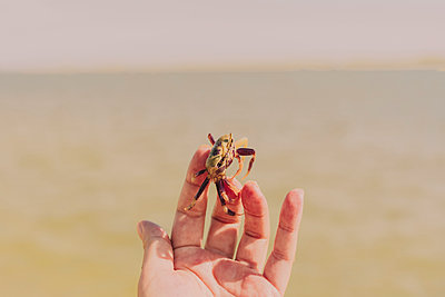 Close-up of woman hand holding crab against sea during sunny day - p300m2221072 by Eloisa Ramos