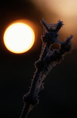 Winternight - p2681616 by Martin Trippen