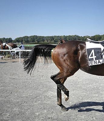 Horse-race - p9111516 by Gaëtan Rossier