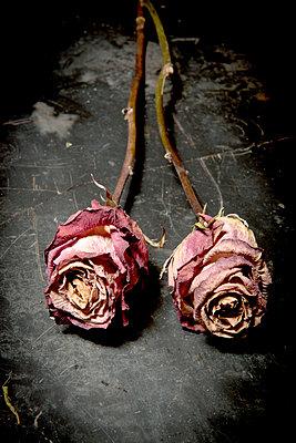 Vertrocknete Rosen - p451m851638 von Anja Weber-Decker