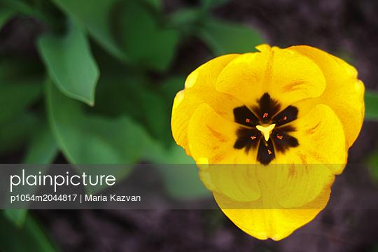 Flower - p1054m2044817 by Maria Kazvan