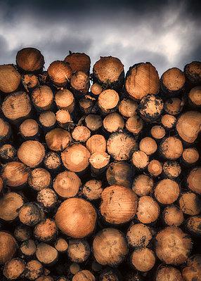 Logs - p1154m1162663 by Tom Hogan